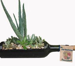 Wine & Design in a Box | Succulent Bottle | Red